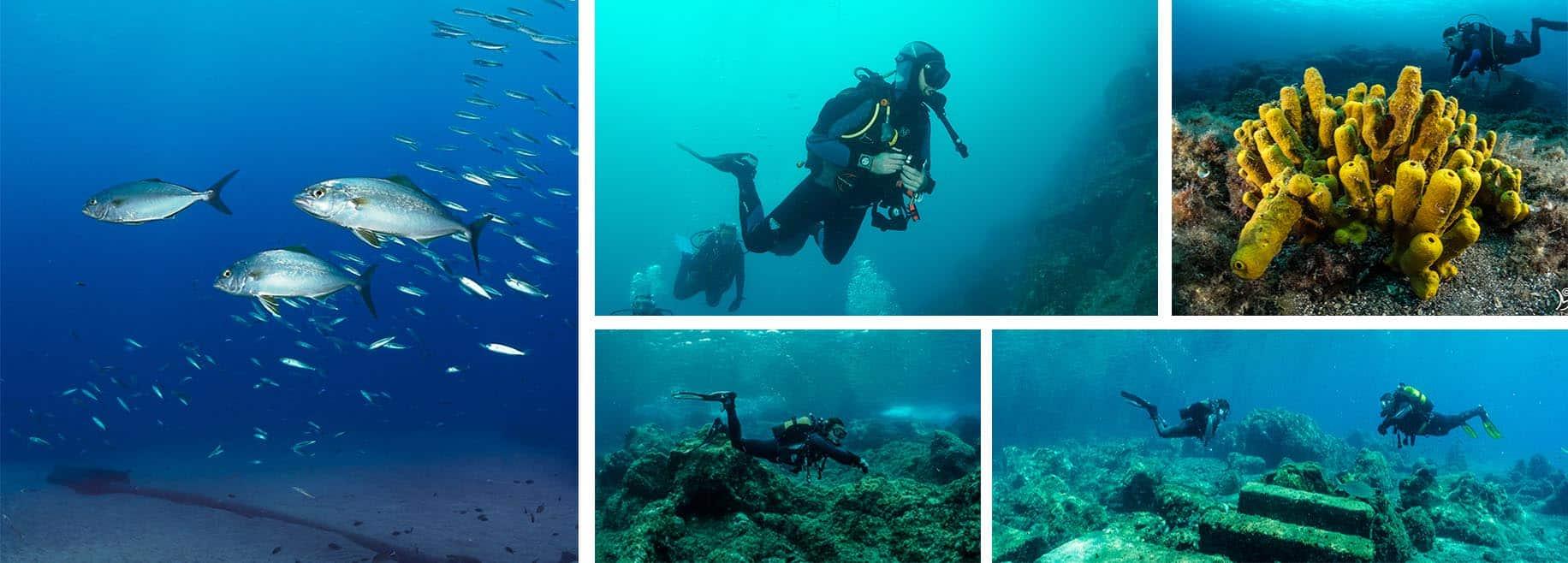 galeria fotografica lanzarote ocean divers