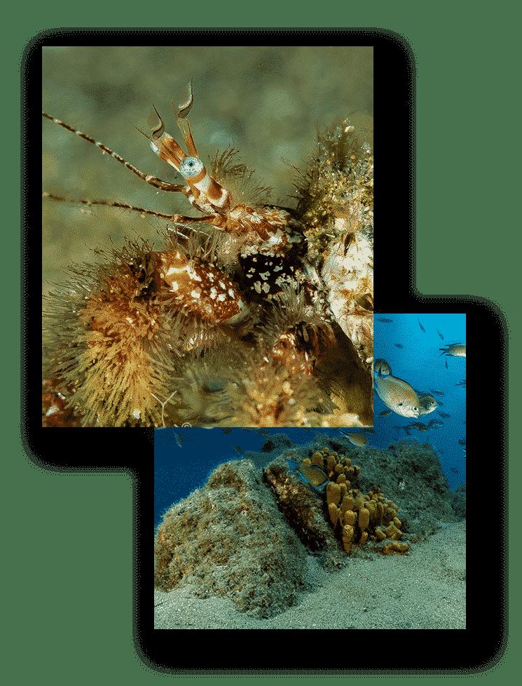 lanzarote divers mojodive inmersiones el muellito