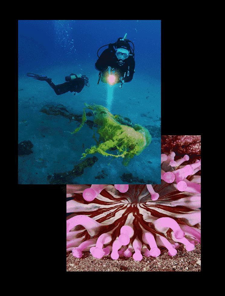 mojo dive inmersiones las coloradas titulo buceo lanzarote