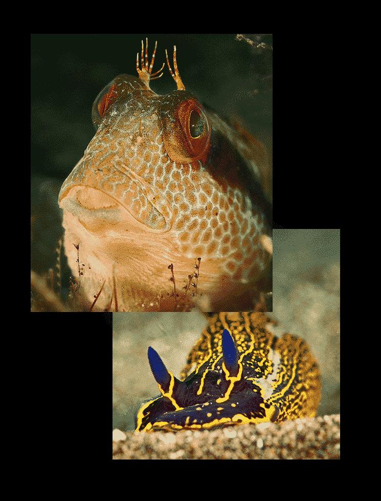 mojodive inmersiones el agujero azul
