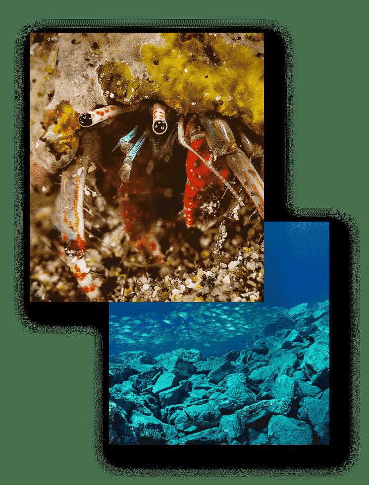 mojo dive inmersiones el emisario cangrejos lanzarote