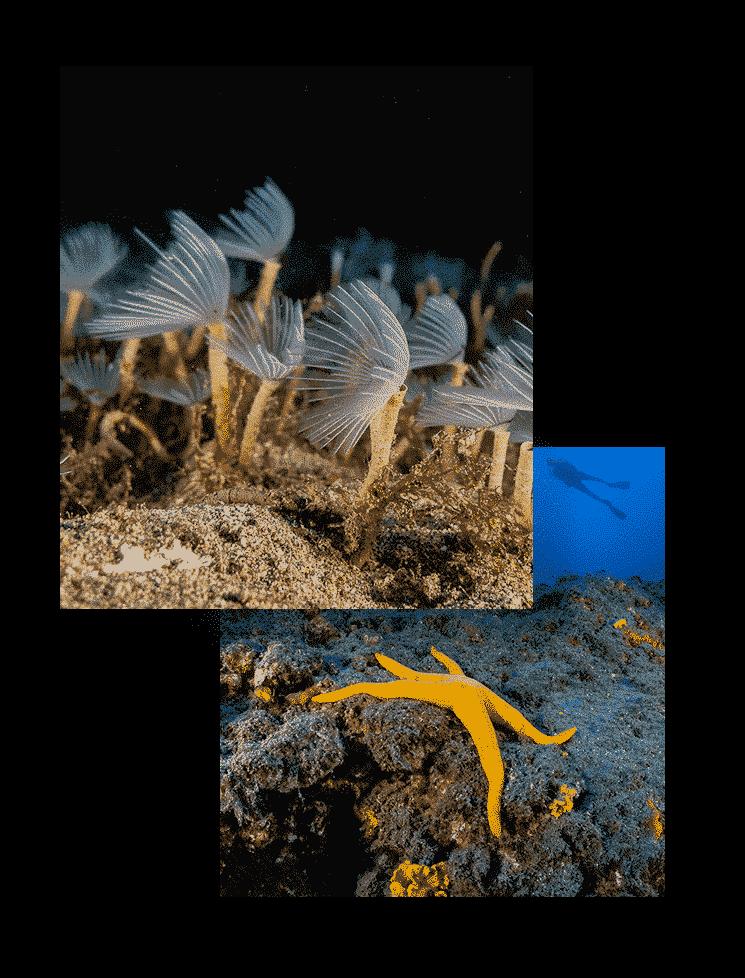 mojo dive inmersiones richies place lanzarote centros de buceo en lanzarote