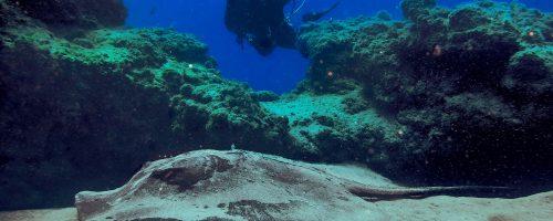 mojo-dive-lanzarote-ocean-divers-inmersiones-el-ascensor