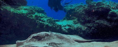 mojo dive lanzarote ocean divers inmersiones el ascensor submarinismo en lanzarote