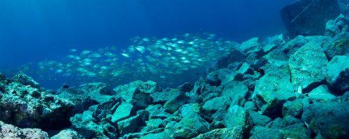 mojo-dive-lanzarote-ocean-divers-inmersiones-el-emisario