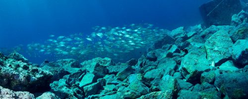 mojo dive lanzarote ocean divers inmersiones el emisario lanzarote