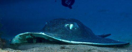 mojo dive lanzarote ocean divers inmersiones charcos del palo